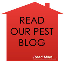 house-pest-blog