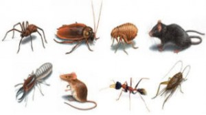 building & pest inspection