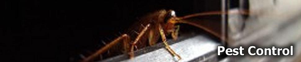 Pest Control Brisbane area